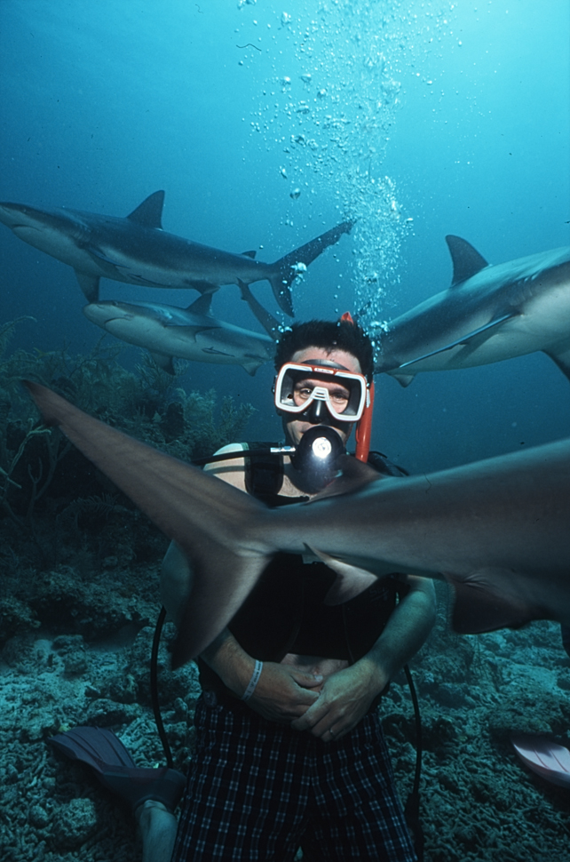 Maurice and sharks, Nassau Bahamas.jpg - Maurice and sharks