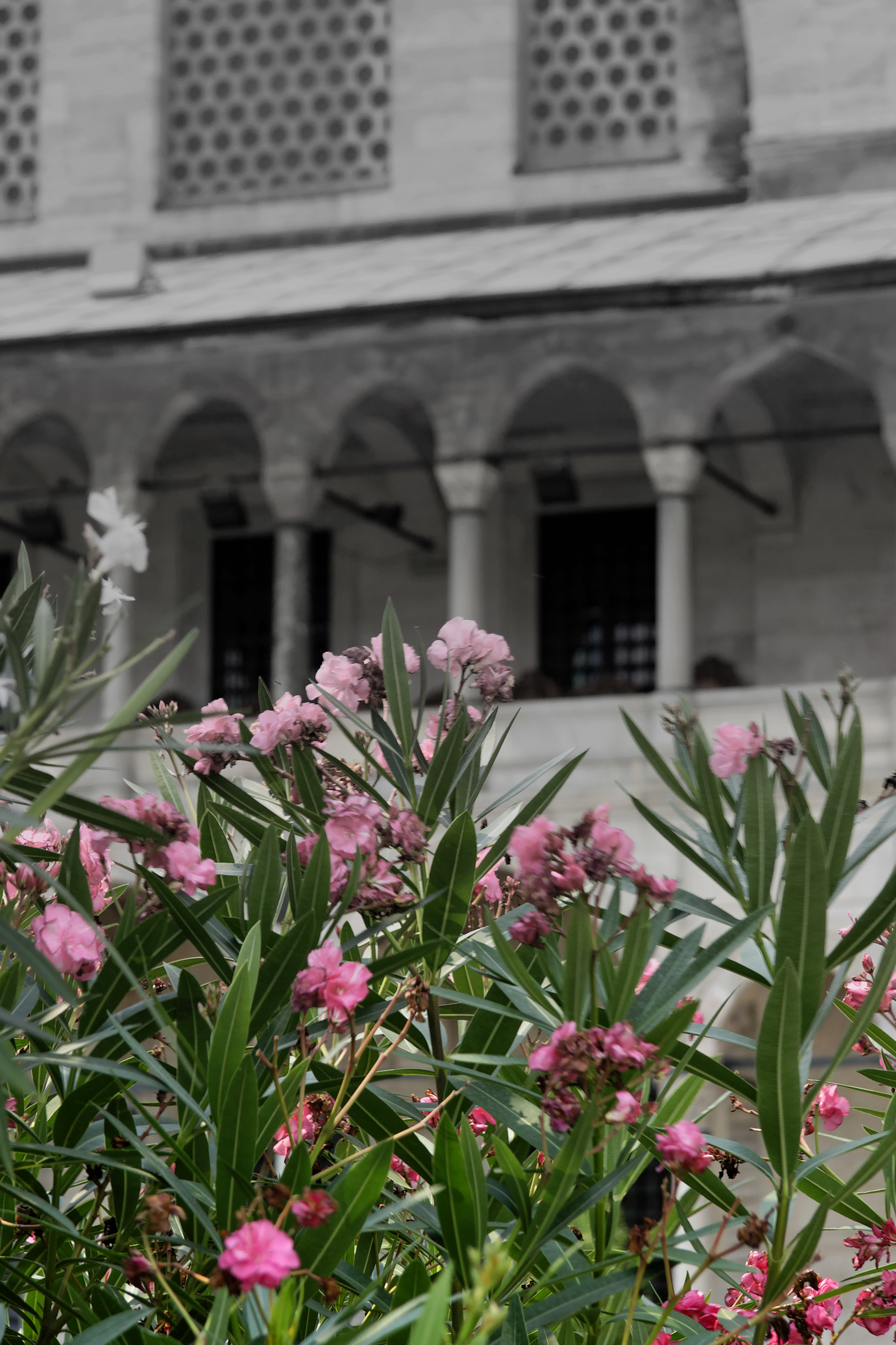 Flowers and mosque, Selcuk Turkey.jpg